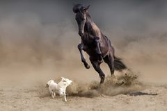 Horse and dog. Horse play with dog in desert dust Stock Photos