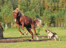 Horse and dog play together. Horse and dog playing together Stock Image