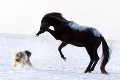 Horse and dog. Play at winter Stock Images