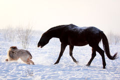 Horse and dog. Play at winter Stock Photography