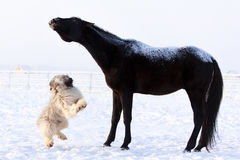 Horse and dog. Play at winter Stock Image