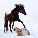 Horse and dog. Play at winter Stock Photo