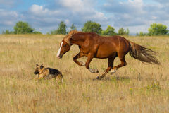 Horse and dog run Royalty Free Stock Image