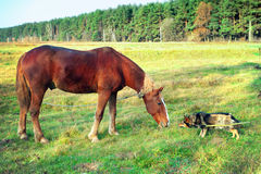 Horse and dog. Sniff to each other Royalty Free Stock Photo