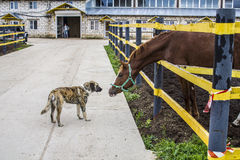 Horse & dog Royalty Free Stock Photography