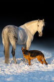 Horse and dog. White horse with dog in snow Stock Photo