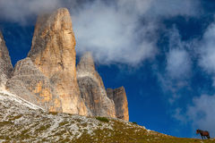 Horse in the Dolomites, Italy Stock Images