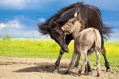 Horse and donkey Stock Images