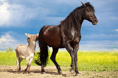 Horse and donkey Stock Images