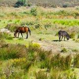 Horse and Donkey Royalty Free Stock Photography