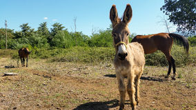 Horse and donkey Royalty Free Stock Photos