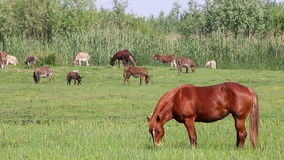 Horse and donkeys stock footage