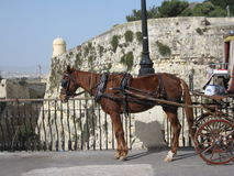 A horse drawing a carriage in Valletta, on Malta. A picture of a horse and a carriage in Valletta, Malta on a clear day. With a view of a stone wall, tower and stock images