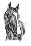 Horse drawing. Pencil drawing of horse with white blaze Royalty Free Stock Photography