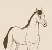 Horse drawing Royalty Free Stock Photo