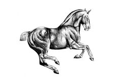 Horse drawing sketch art handmade Royalty Free Stock Photos