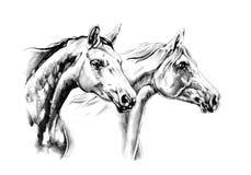 Horse drawing sketch art handmade Stock Photos