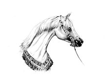 Horse drawing sketch art handmade Stock Images