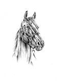 Horse drawing sketch art handmade Royalty Free Stock Photo