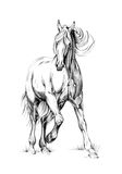 Horse drawing sketch art handmade Stock Photography