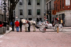 Horse drawm carriage and fare,Boston,Mass,2014. Beautifully decorated horse and carriage standing on the cobblestone streets of Boston, waiting for next fare Royalty Free Stock Images