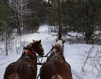 Horse-drawn έλκηθρο στο χειμερινό ίχνος από το Peter J Restivo Στοκ Φωτογραφία