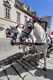 Horse-drawn μεταφορά - Βιέννη, Αυστρία Στοκ φωτογραφία με δικαίωμα ελεύθερης χρήσης