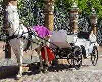 Horse-drawn μεταφορά (μεταφορά) - μεταφορά τουριστών σε Άγιο Pet Στοκ εικόνες με δικαίωμα ελεύθερης χρήσης