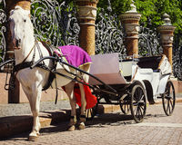 Horse-drawn μεταφορά (μεταφορά) - μεταφορά τουριστών Στοκ Φωτογραφίες