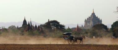 Horse-drawn μεταφορά σε Bagan Στοκ φωτογραφία με δικαίωμα ελεύθερης χρήσης