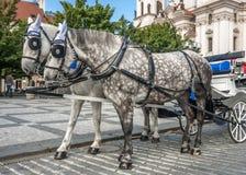 Horse-drawn μεταφορά στις οδούς της Πράγας Στοκ εικόνα με δικαίωμα ελεύθερης χρήσης