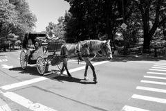 Horse-drawn μεταφορά, NYC Στοκ εικόνα με δικαίωμα ελεύθερης χρήσης
