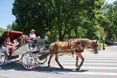 Horse-drawn μεταφορά, NYC Στοκ Φωτογραφίες