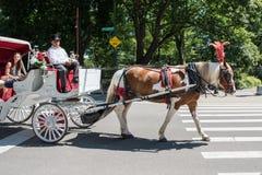 Horse-drawn μεταφορά, NYC Στοκ Φωτογραφία