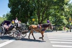 Horse-drawn μεταφορά, NYC Στοκ Εικόνες