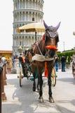 Horse-drawn μεταφορά Piazza del Duomo στην Πίζα, Ιταλία Στοκ Φωτογραφίες