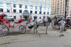 Horse-drawn μεταφορές στην πόλη της Νέας Υόρκης Στοκ φωτογραφία με δικαίωμα ελεύθερης χρήσης