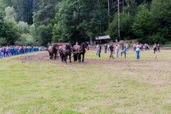 Horse-drawn οχήματα Στοκ Φωτογραφίες