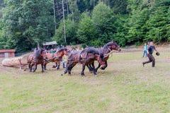 Horse-drawn οχήματα Στοκ φωτογραφία με δικαίωμα ελεύθερης χρήσης
