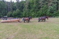 Horse-drawn οχήματα Στοκ Εικόνες