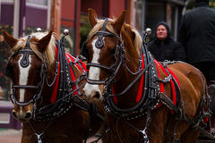 Horse-drawn γύρος βαγονιών εμπορευμάτων Στοκ εικόνα με δικαίωμα ελεύθερης χρήσης