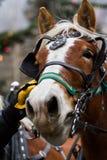 Horse-drawn γύρος βαγονιών εμπορευμάτων Στοκ Εικόνες