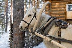 Horse-drawn Στοκ εικόνα με δικαίωμα ελεύθερης χρήσης