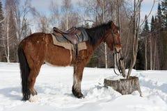Horse-drawn Στοκ φωτογραφίες με δικαίωμα ελεύθερης χρήσης