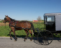 Horse Drawn Amish Carriage. Springtime sun welcomes an amish family in its black horse drawn carriage Royalty Free Stock Images