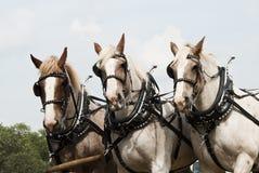 Horse-drawn bewirtschaftendemonstrationen Lizenzfreie Stockfotos