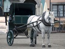 Horse drawn carriage. Black carriage and a white horse in Warsaw stock image