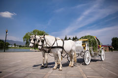 Horse drawn carriage. At wedding Stock Images