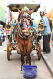 Horse-drawn carriage royalty free stock photo