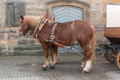 Horse drawn carriage Stock Image